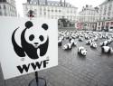 1961年,WWF的熊猫标志设计诞生